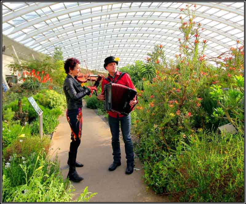 Fiddlebox in the Great Glasshouse